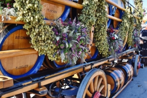 Beer wagons are part of the start of the annual oktoberfest in munich