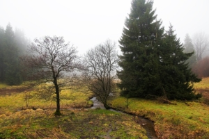 In the Maisinger See nature reserve you can experience great hikes in Munich's surroundings und beautiful nature